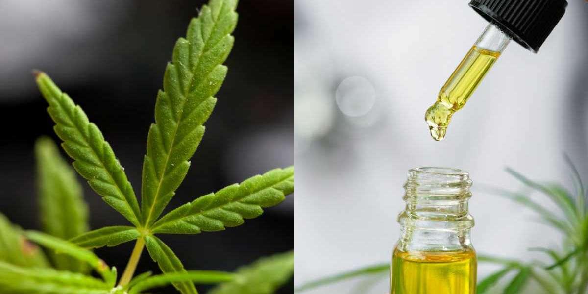 [Buy 1 Get 1] Pharma Bloom CBD Oil® Free Bottle
