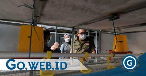 Ridwan Kamil:  Ayam Juga Punya Apartemen, Program Petani Milenial Kurangi Pengangguran - Go Indonesia